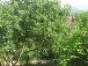 Садовые участки в Сочи